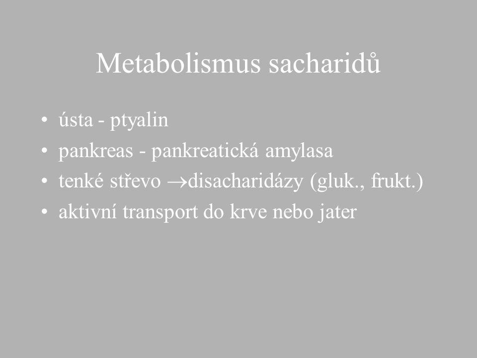 Enzymy trávící soustavy,výskyt pankreas - žláza pod žaludkem endokrinní tkáň - do krve inzulín,glukagon exokrinn tkáň - šťáva s obsahem HCO 3, trávící