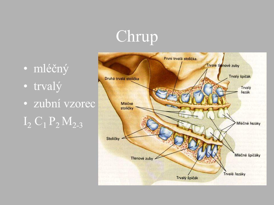Dutina ústní zuby,jazyk slin.žlázy sliny(mucin,ptyalin)