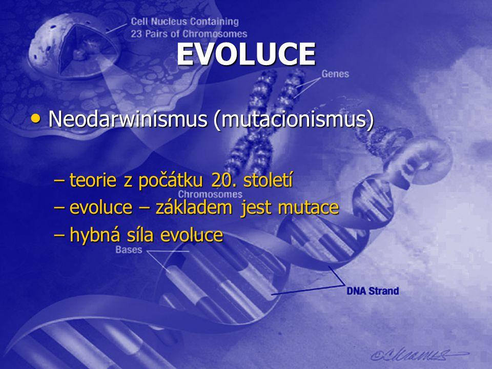EVOLUCE Neodarwinismus (mutacionismus) Neodarwinismus (mutacionismus) –teorie z počátku 20. století –evoluce – základem jest mutace –hybná síla evoluc