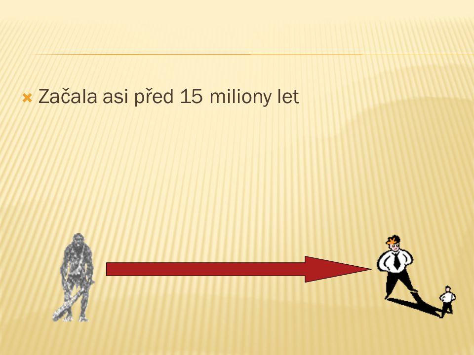  Starší předchůdce neandrtálce  Žil před 300 000 – 200 000 lety.  Mozkovna 1200 cm 3