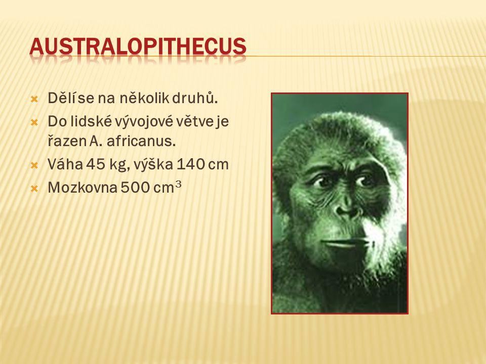  Dělí se na několik druhů. Do lidské vývojové větve je řazen A.
