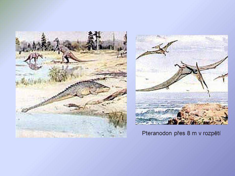 Pteranodon přes 8 m v rozpětí