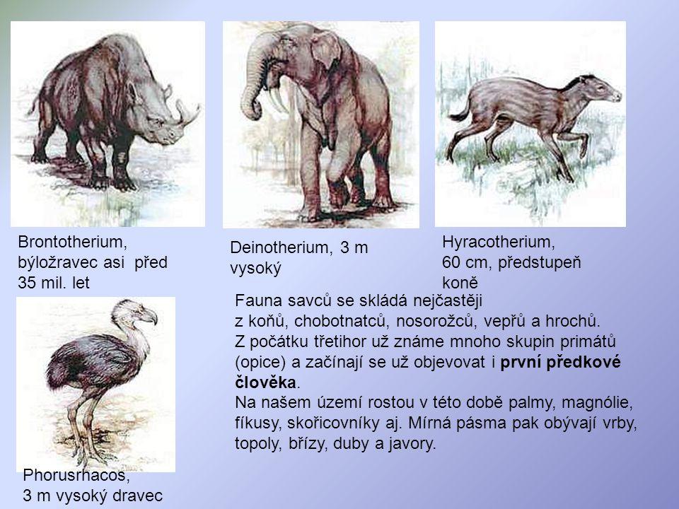 Brontotherium, býložravec asi před 35 mil. let Deinotherium, 3 m vysoký Hyracotherium, 60 cm, předstupeň koně Phorusrhacos, 3 m vysoký dravec Fauna sa