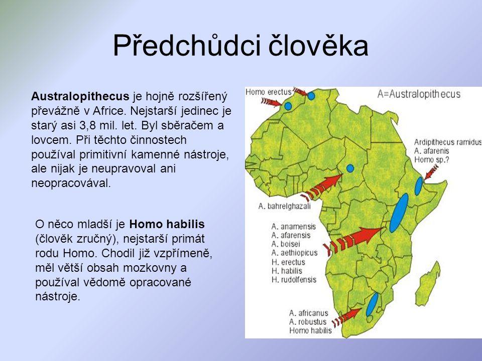 Předchůdci člověka Australopithecus je hojně rozšířený převážně v Africe. Nejstarší jedinec je starý asi 3,8 mil. let. Byl sběračem a lovcem. Při těch