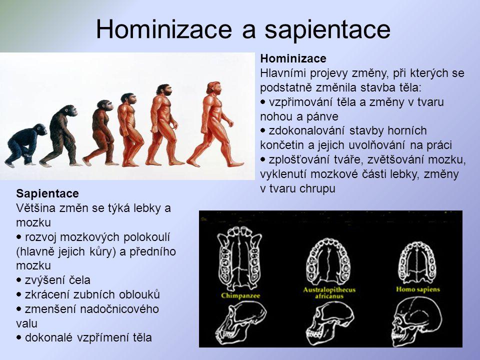 Hominizace a sapientace Hominizace Hlavními projevy změny, při kterých se podstatně změnila stavba těla:  vzpřimování těla a změny v tvaru nohou a pá