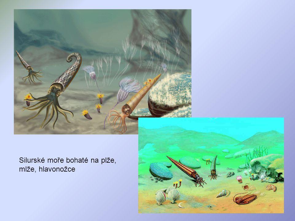 Silurské moře bohaté na plže, mlže, hlavonožce