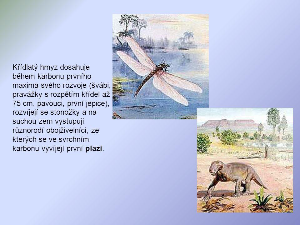 Křídlatý hmyz dosahuje během karbonu prvního maxima svého rozvoje (švábi, pravážky s rozpětím křídel až 75 cm, pavouci, první jepice), rozvíjejí se st