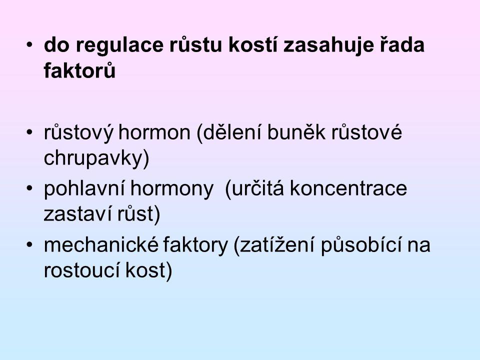 do regulace růstu kostí zasahuje řada faktorů růstový hormon (dělení buněk růstové chrupavky) pohlavní hormony (určitá koncentrace zastaví růst) mechanické faktory (zatížení působící na rostoucí kost)