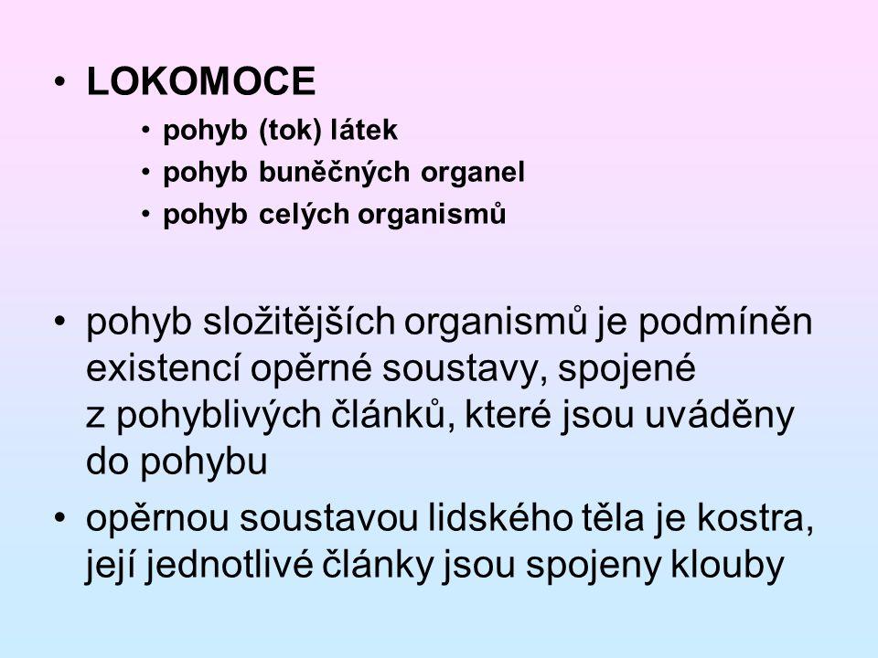 LOKOMOCE pohyb (tok) látek pohyb buněčných organel pohyb celých organismů pohyb složitějších organismů je podmíněn existencí opěrné soustavy, spojené z pohyblivých článků, které jsou uváděny do pohybu opěrnou soustavou lidského těla je kostra, její jednotlivé články jsou spojeny klouby
