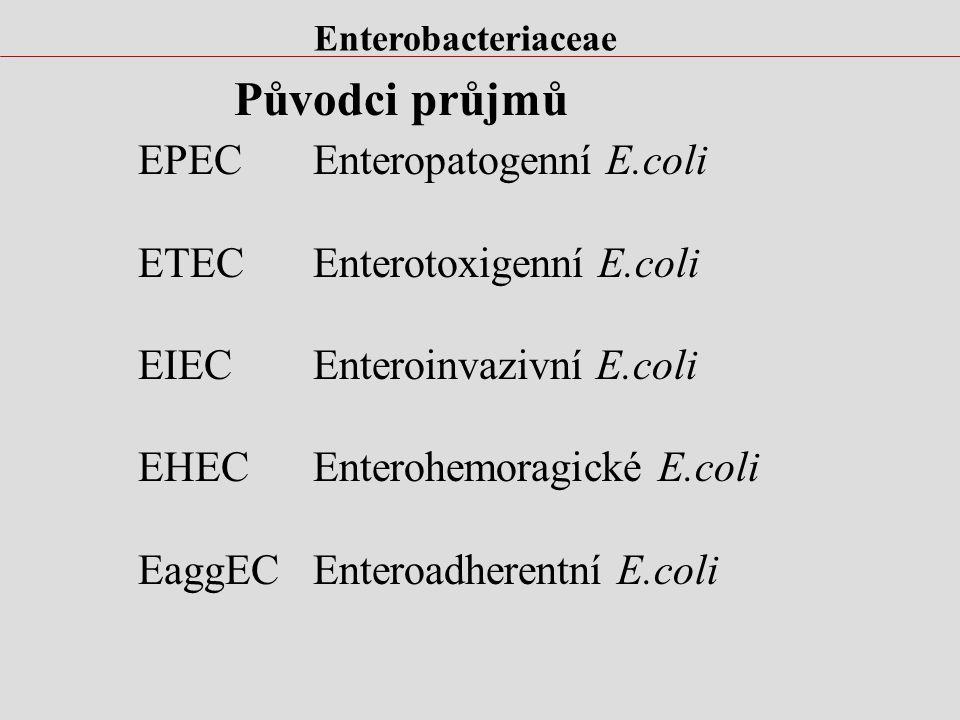 Enterobacteriaceae Biochemické vlastnosti E.coli.