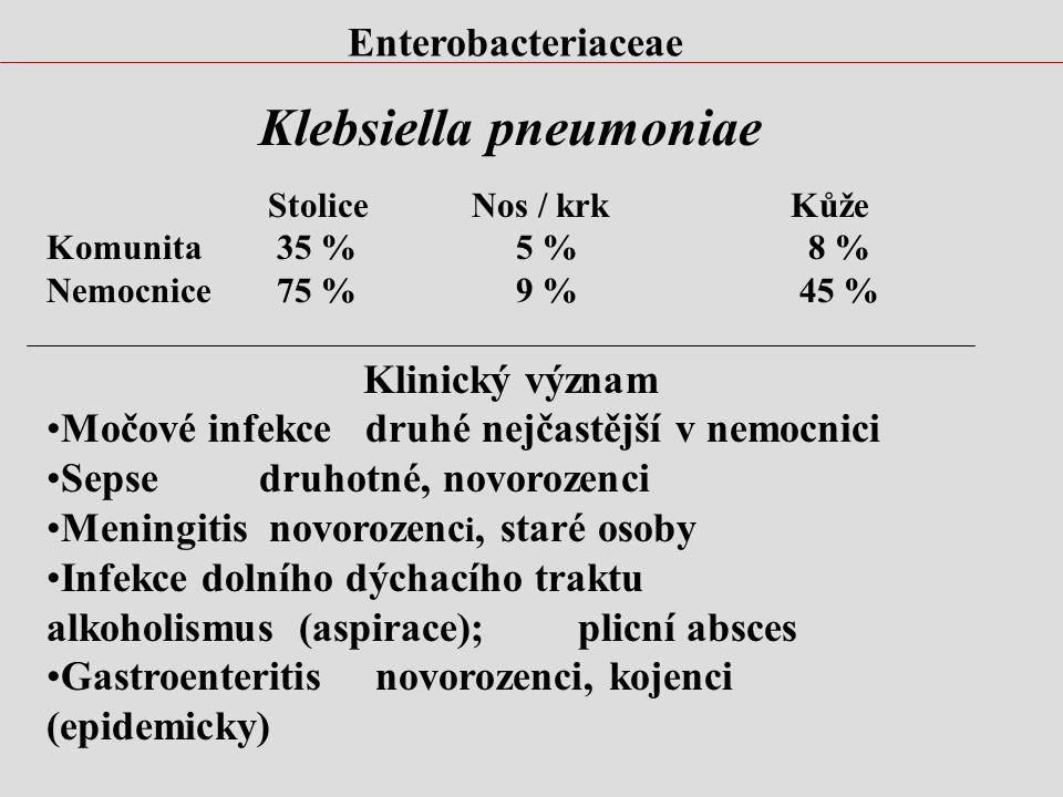 Enterobacteriaceae Klebsiella pneumoniae