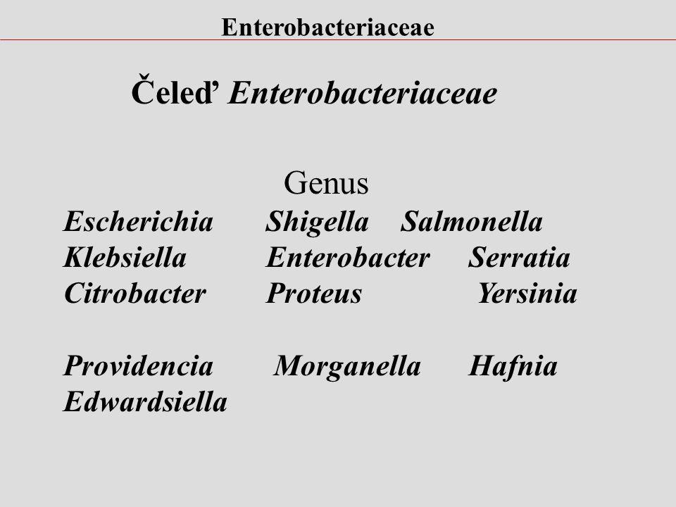 Klasifikace podle fenotypuphenospecies morfologie, biochemie podle genotypugenospecies ( obsah G:C) DNA hybridizace Subspecifická klasifikace molekulo
