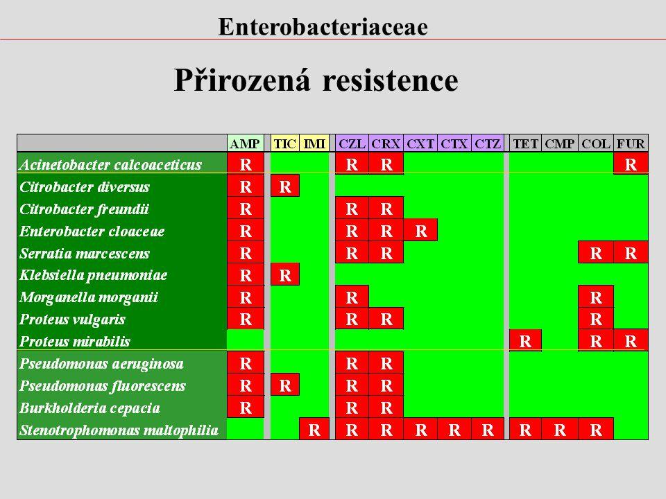 Enterobacteriaceae Genus EscherichiaShigellaSalmonella KlebsiellaEnterobacterSerratia CitrobacterProteus Yersinia Providencia Morganella Hafnia Edward