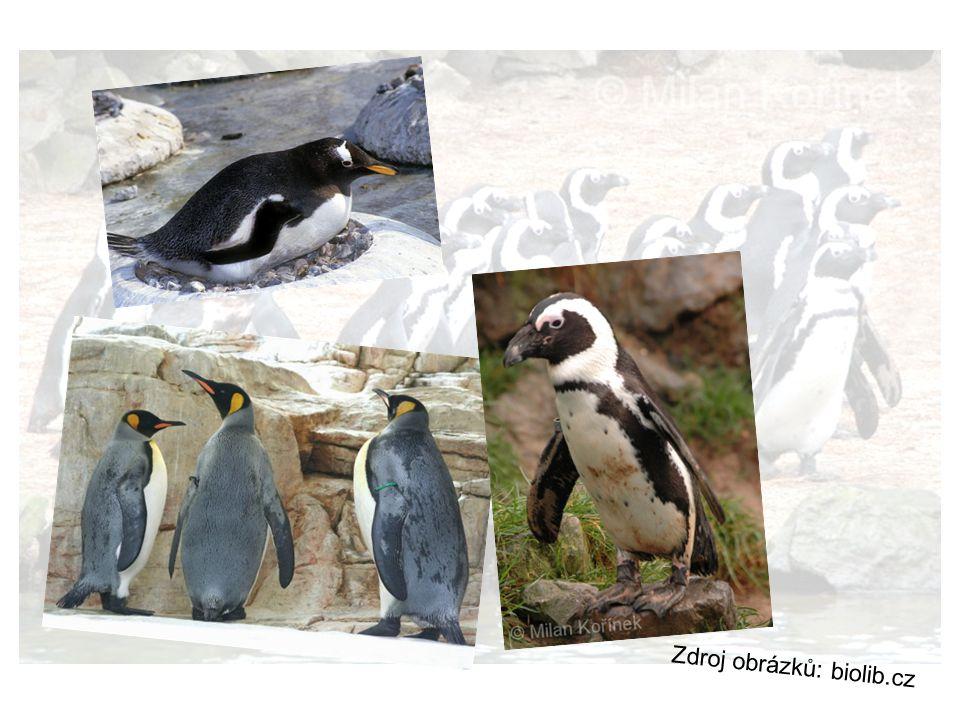 Vědecká klasifikace Říše:Živočichové (Animalia) Kmen:Strunatci (Chordata) Podkmen:obratlovci (Vertebrata) Třída:Ptáci (Aves) Podtřída:Letci (Neognathae) Řád:Tučňáci (Sphenisciformes) Čeleď:Tučňákovití (Spheniscidae)