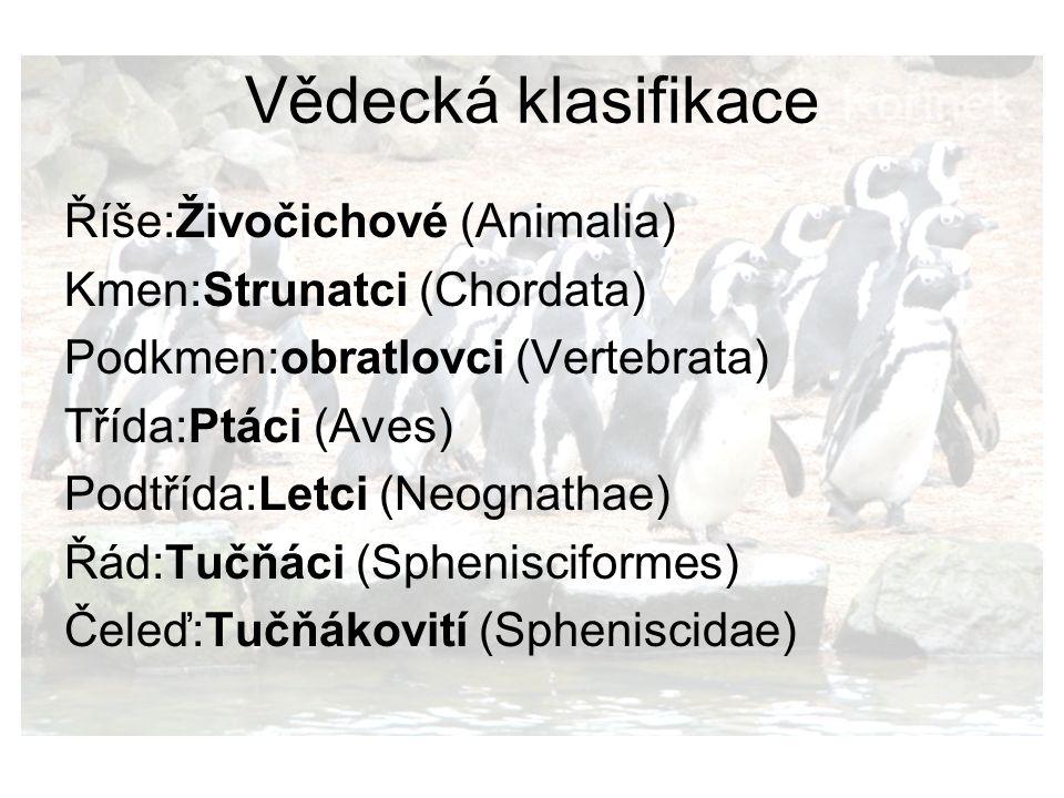 zdroje Wikipedia.cz (tučňáci, tučňák nejmenší) tucnaci.wz.cz Obrázky: Zdroj je uveden vždy na obrázku, ostatní jsou z biolib.cz Obrázky na pozdí: biolib.cz a commons.wikimedia.org