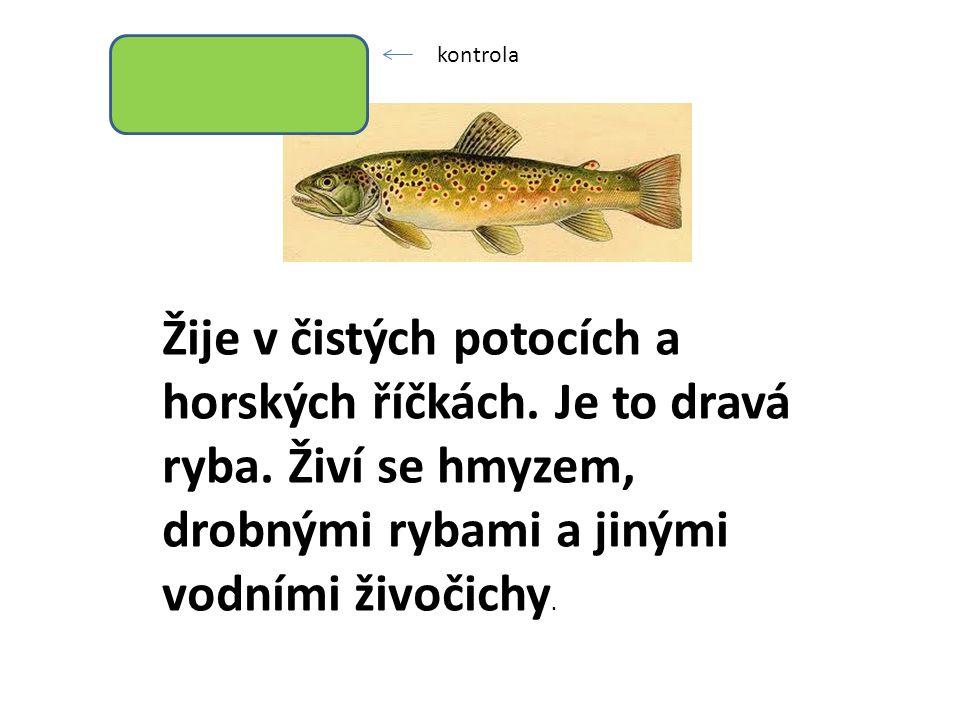 Žije v čistých potocích a horských říčkách. Je to dravá ryba.
