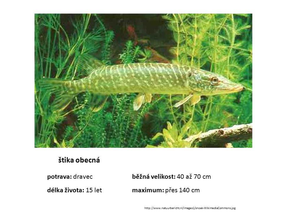 štika obecná potrava: dravecběžná velikost: 40 až 70 cm délka života: 15 letmaximum: přes 140 cm http://www.natuurbericht.nl/images1/snoek-WikimediaCo