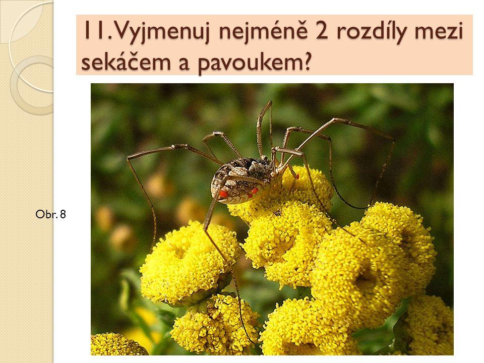 11. Vyjmenuj nejméně 2 rozdíly mezi sekáčem a pavoukem? Obr. 8