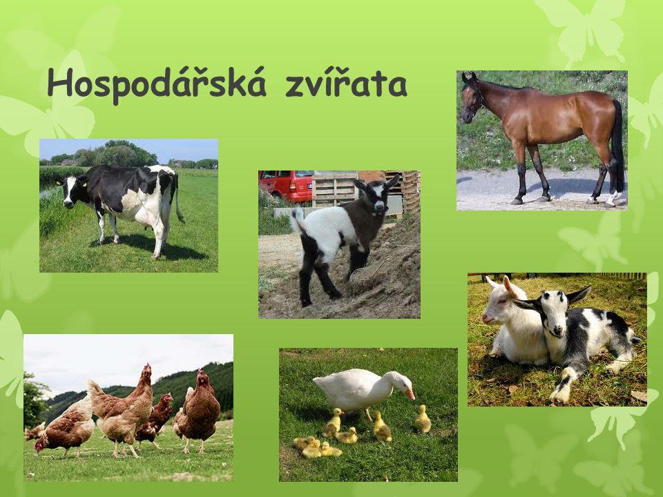 Hospodářská zvířata