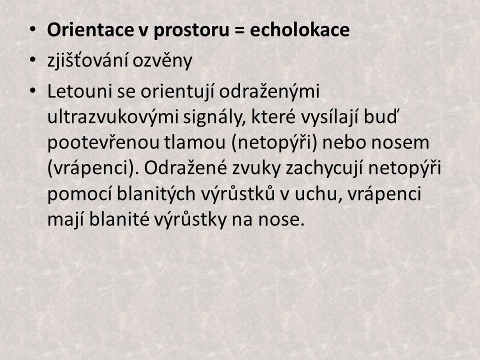 Orientace v prostoru = echolokace zjišťování ozvěny Letouni se orientují odraženými ultrazvukovými signály, které vysílají buď pootevřenou tlamou (netopýři) nebo nosem (vrápenci).