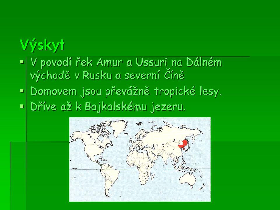 Výskyt  V povodí řek Amur a Ussuri na Dálném východě v Rusku a severní Číně  Domovem jsou převážně tropické lesy.