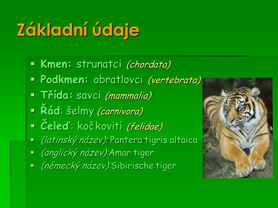 Základní údaje  Kmen: strunatci (chordata)  Podkmen: obratlovci (vertebrata)  Třída: savci (mammalia)  Řád: šelmy (carnivora)  Čeleď: kočkovití (felidae)  (latinský název): Pantera tigris altaica  (anglický název):Amar tiger  (německý název):Sibirische tiger