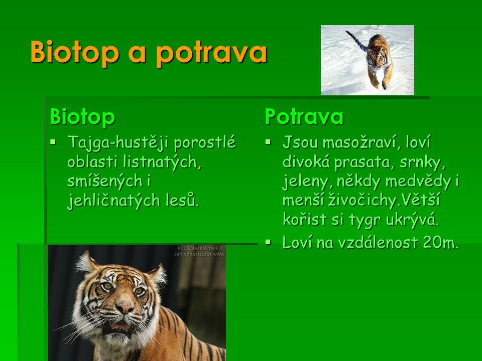 Biotop a potrava Biotop  Tajga-hustěji porostlé oblasti listnatých, smíšených i jehličnatých lesů.