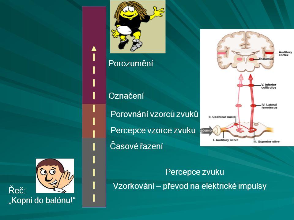 """Porozumění Označení Porovnání vzorců zvuků Percepce vzorce zvuku Vzorkování – převod na elektrické impulsy Časové řazení Řeč: """"Kopni do balónu!"""" Perce"""
