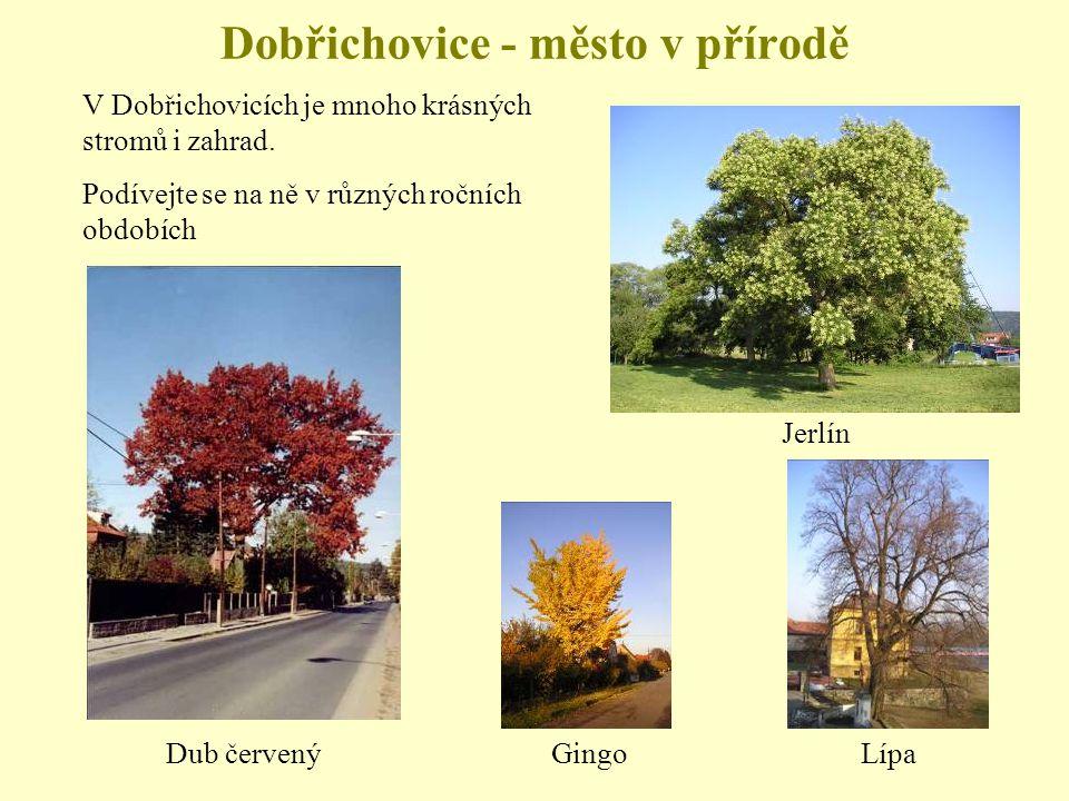Dobřichovice - město v přírodě V Dobřichovicích je mnoho krásných stromů i zahrad.