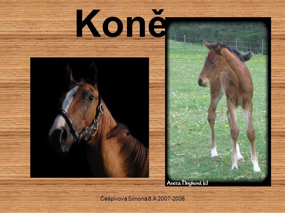 Češpivová Simona 8.A 2007-2008 Koně