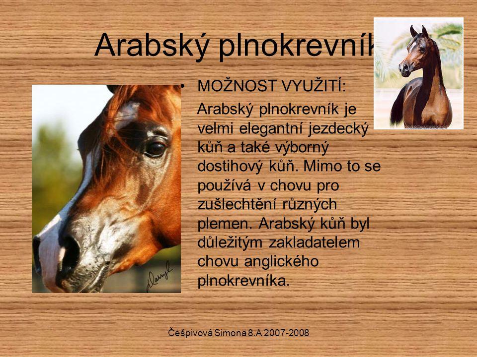 Češpivová Simona 8.A 2007-2008 Arabský plnokrevník MOŽNOST VYUŽITÍ: Arabský plnokrevník je velmi elegantní jezdecký kůň a také výborný dostihový kůň.
