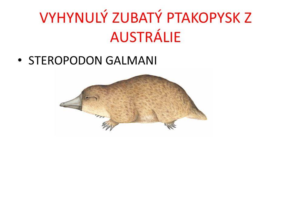 VYHYNULÝ ZUBATÝ PTAKOPYSK Z AUSTRÁLIE STEROPODON GALMANI