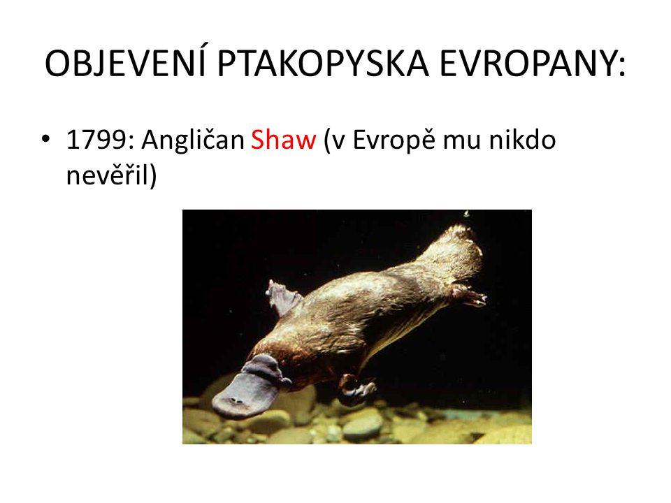 OBJEVENÍ PTAKOPYSKA EVROPANY: 1799: Angličan Shaw (v Evropě mu nikdo nevěřil)