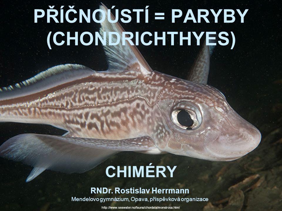 PŘÍČNOÚSTÍ = PARYBY (CHONDRICHTHYES) CHIMÉRY RNDr. Rostislav Herrmann Mendelovo gymnázium, Opava, příspěvková organizace http://www.seawater.no/fauna/