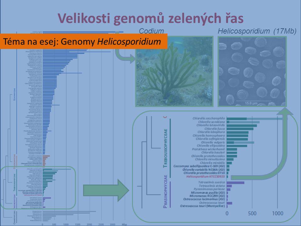 Velikosti genomů zelených řas Helicosporidium (17Mb)Codium Téma na esej: Genomy Helicosporidium