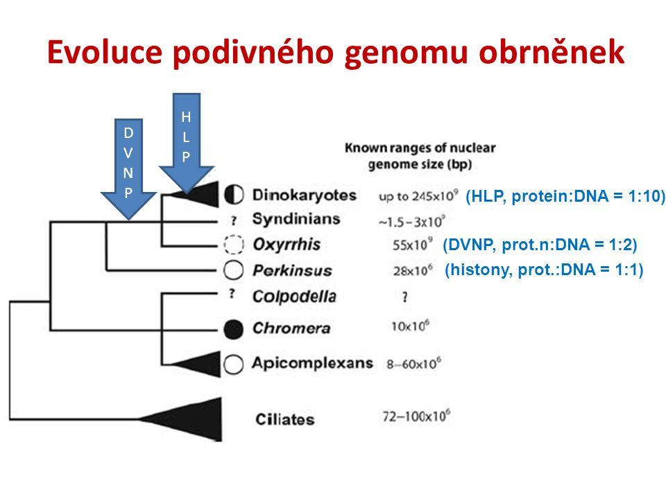 Evoluce podivného genomu obrněnek (histony, prot.:DNA = 1:1) (DVNP, prot.n:DNA = 1:2) (HLP, protein:DNA = 1:10) DVNPDVNP HLPHLP