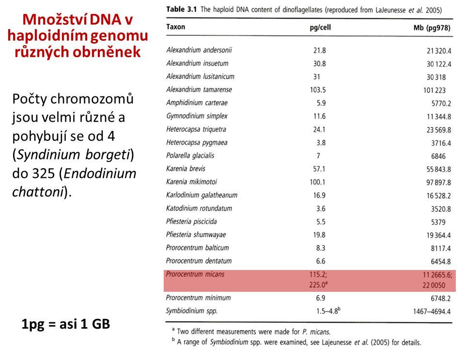 1pg = asi 1 GB Množství DNA v haploidním genomu různých obrněnek Počty chromozomů jsou velmi různé a pohybují se od 4 (Syndinium borgeti) do 325 (Endo