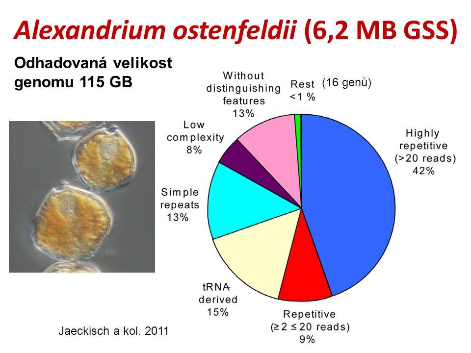 Alexandrium ostenfeldii (6,2 MB GSS) (16 genů) Jaeckisch a kol.