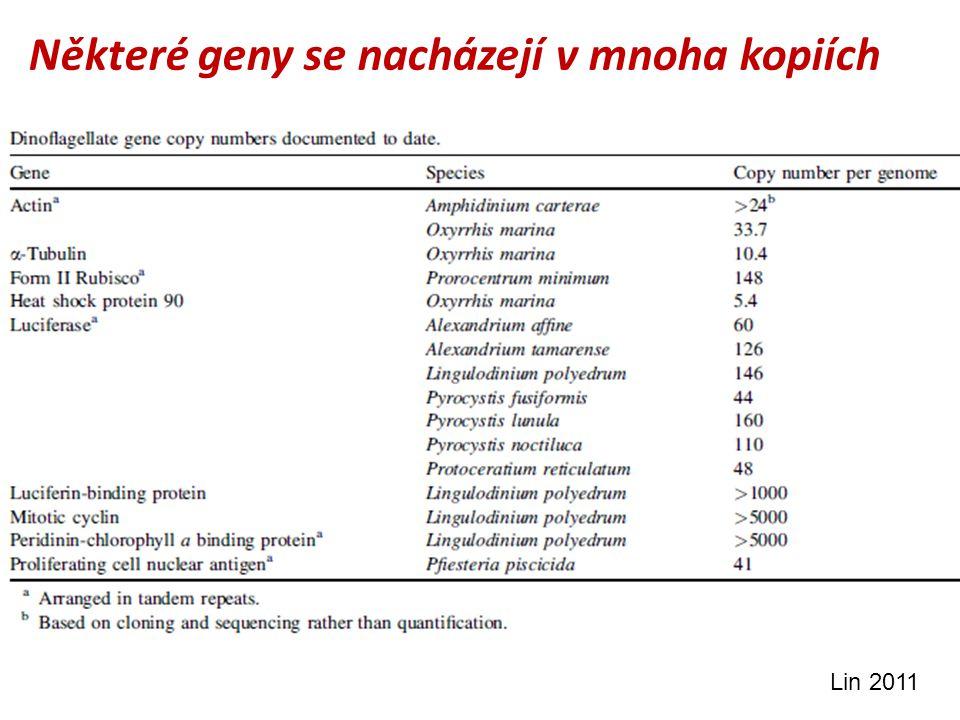 Některé geny se nacházejí v mnoha kopiích Lin 2011
