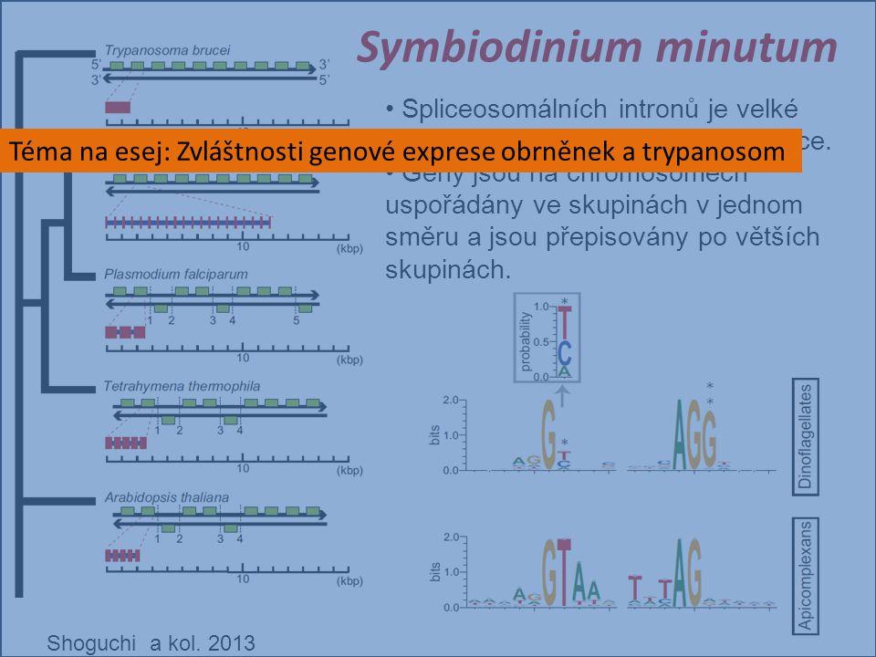 Shoguchi a kol. 2013 Spliceosomálních intronů je velké množství a mají nekanonické hranice. Geny jsou na chromosomech uspořádány ve skupinách v jednom