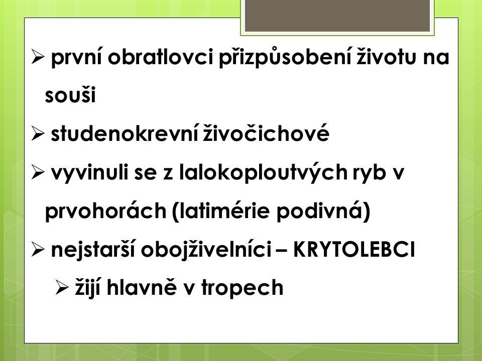  první obratlovci přizpůsobení životu na souši  studenokrevní živočichové  vyvinuli se z lalokoploutvých ryb v prvohorách (latimérie podivná)  nej
