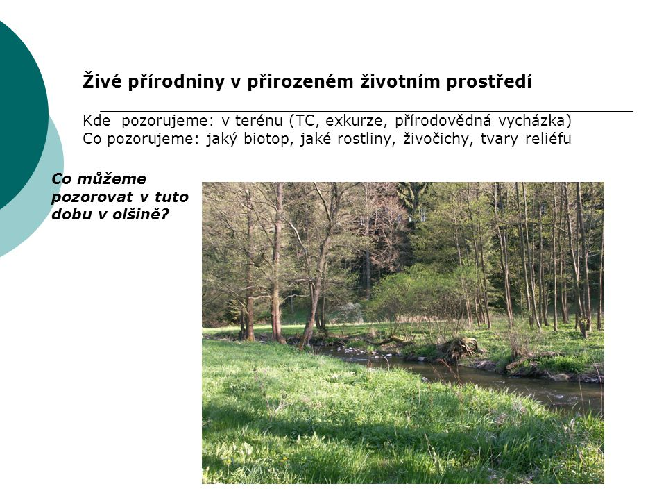 Živé přírodniny v přirozeném životním prostředí Kde pozorujeme: v terénu (TC, exkurze, přírodovědná vycházka) Co pozorujeme: jaký biotop, jaké rostlin