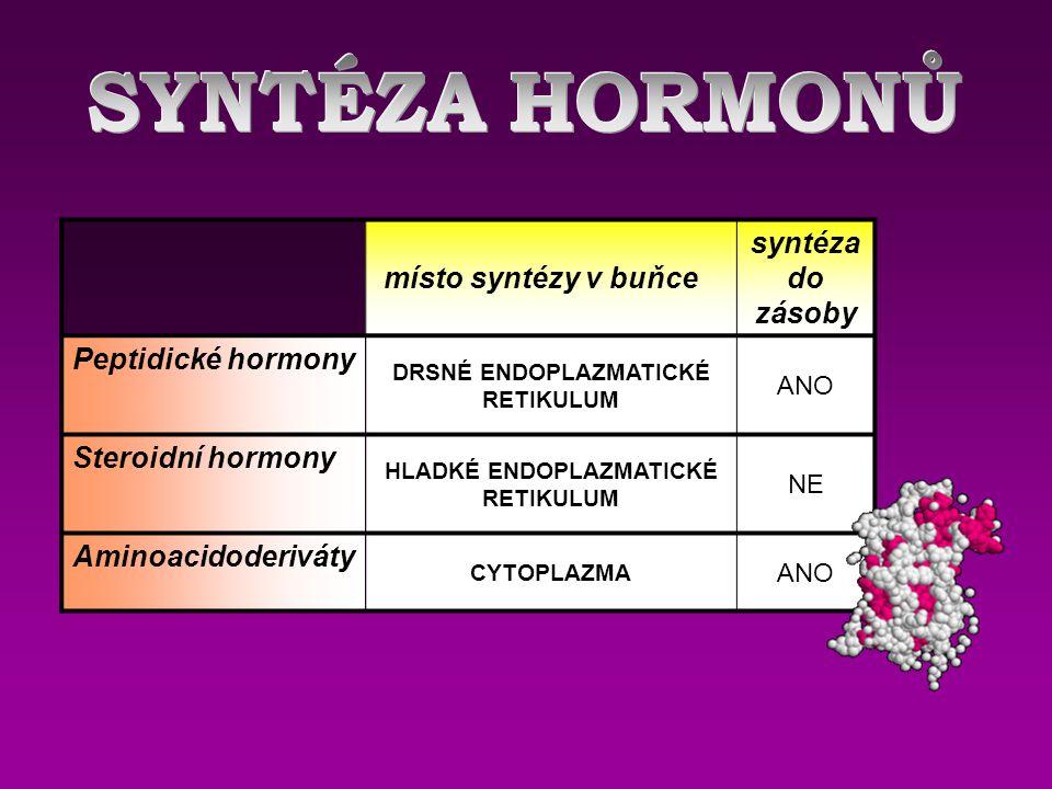 místo syntézy v buňce syntéza do zásoby Peptidické hormony DRSNÉ ENDOPLAZMATICKÉ RETIKULUM ANO Steroidní hormony HLADKÉ ENDOPLAZMATICKÉ RETIKULUM NE A