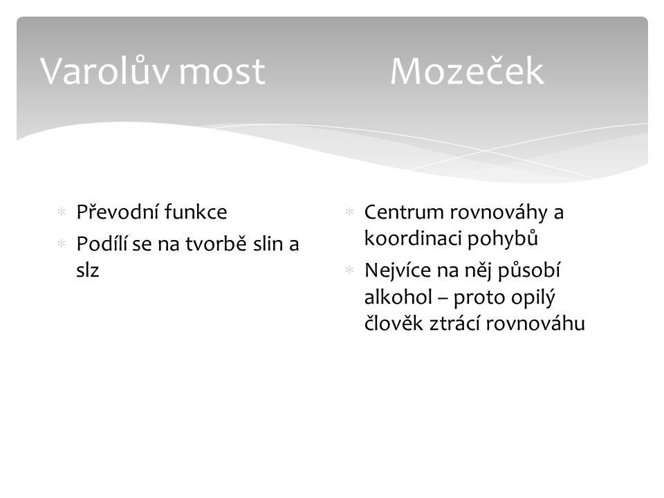 Varolův most Mozeček  Převodní funkce  Podílí se na tvorbě slin a slz  Centrum rovnováhy a koordinaci pohybů  Nejvíce na něj působí alkohol – prot
