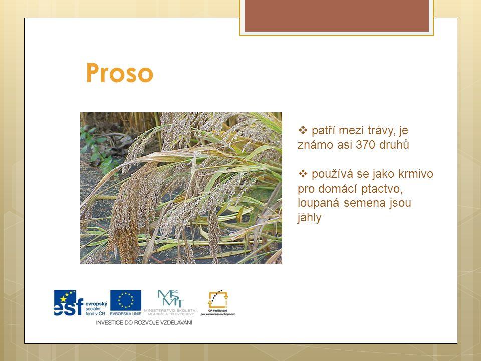 Proso  patří mezi trávy, je známo asi 370 druhů  používá se jako krmivo pro domácí ptactvo, loupaná semena jsou jáhly