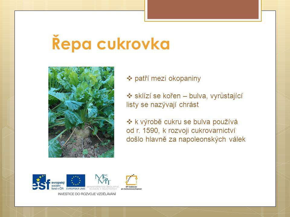 Řepa cukrovka  patří mezi okopaniny  sklízí se kořen – bulva, vyrůstající listy se nazývají chrást  k výrobě cukru se bulva používá od r. 1590, k r