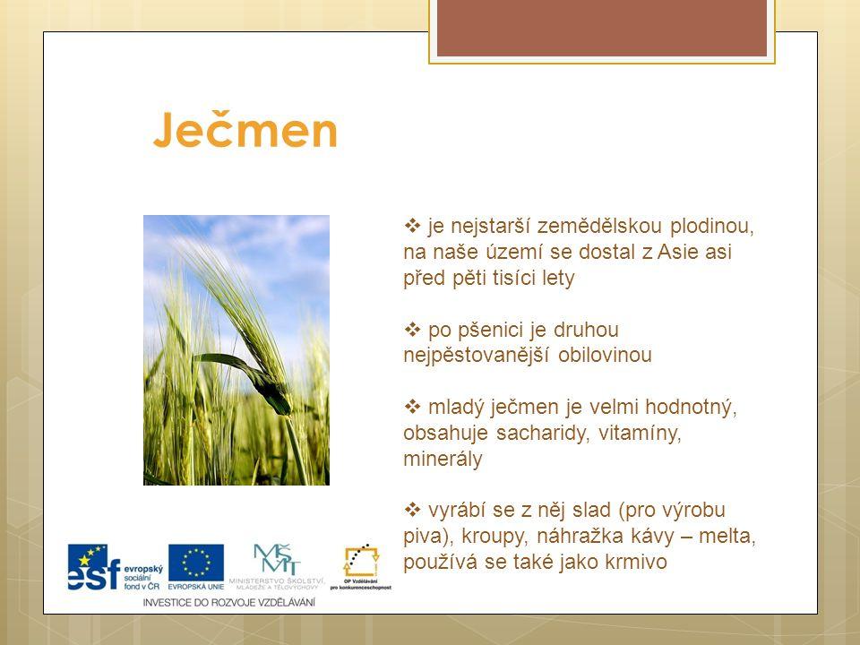 Ječmen  je nejstarší zemědělskou plodinou, na naše území se dostal z Asie asi před pěti tisíci lety  po pšenici je druhou nejpěstovanější obilovinou