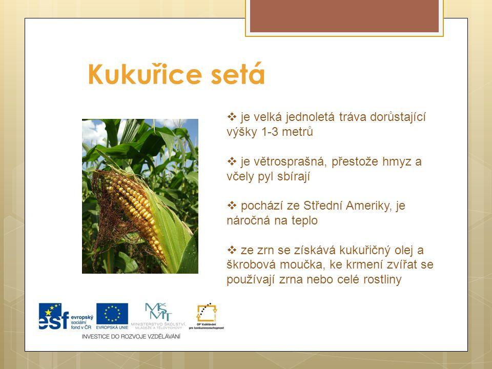 Kukuřice setá Podmínky vhodné pro pěstování jsou v podstatě podobné podmínkám ve kterých rostly původní divoké druhy, s tím, že procesem šlechtění doc