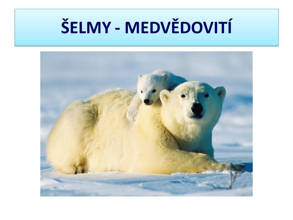 ŠELMY - MEDVĚDOVITÍ