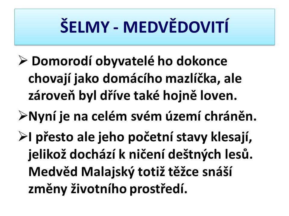 ŠELMY - MEDVĚDOVITÍ  Domorodí obyvatelé ho dokonce chovají jako domácího mazlíčka, ale zároveň byl dříve také hojně loven.  Nyní je na celém svém úz